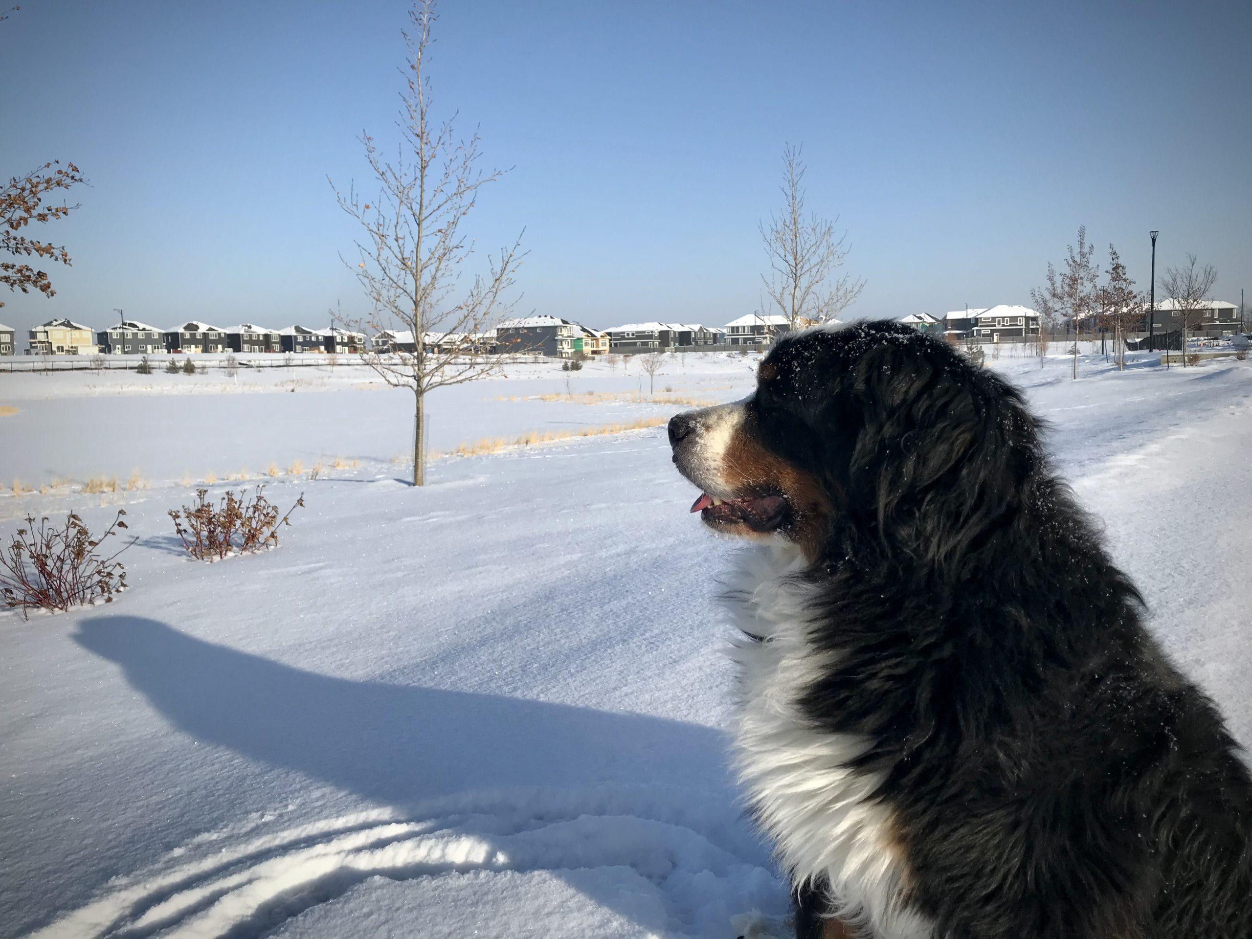 Winter Pond Views